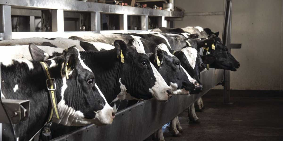 Low milk prices are a big headache for Michigan's family dairy farms