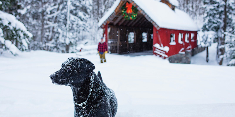 A black Labrador retriever covered in snow, with a man and a red covered bridge in the background