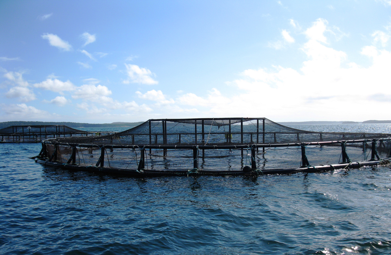 The Great Lakes Are No Place For Fish Farming But There