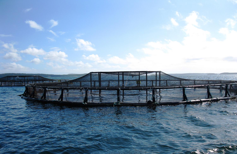 Ocean fish farm