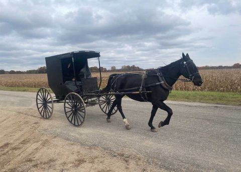 Michigan's Amish seem to love Trump. But voting is another matter.