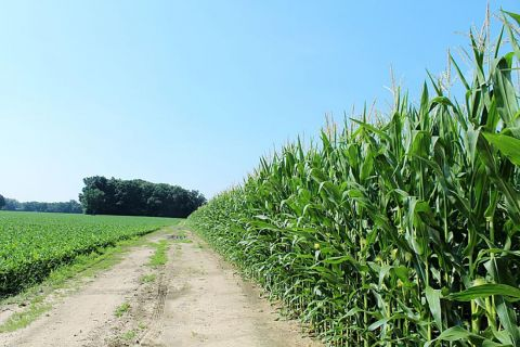 Michigan environment roundup: Climate change spells trouble for Midwest farmers
