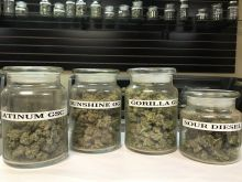 Reefer madness in Michigan. Marijuana shops face hazy future.